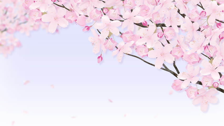 Crowd moving under cherry blossom trees free stock video footage from videvo mightylinksfo