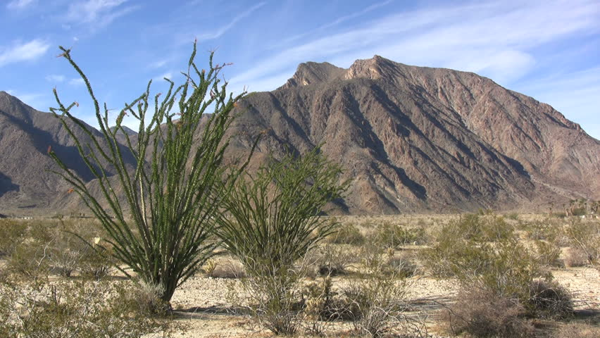 Header of ocotillo