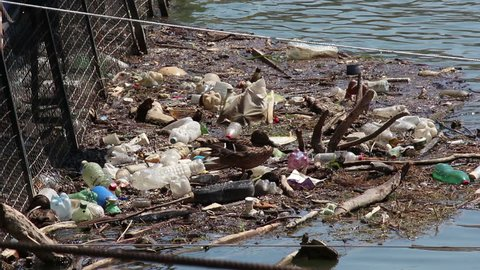 Garbage in the river, ducks