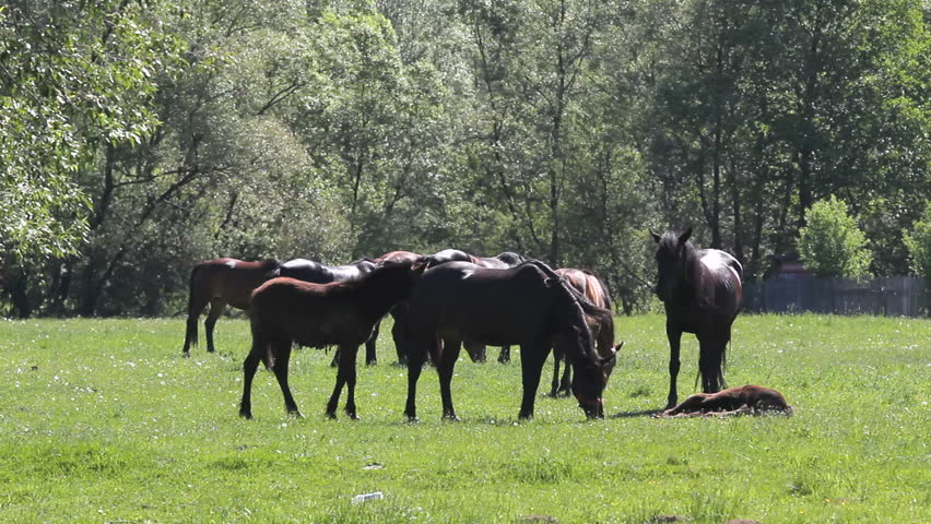 Afbeeldingsresultaat voor horses together