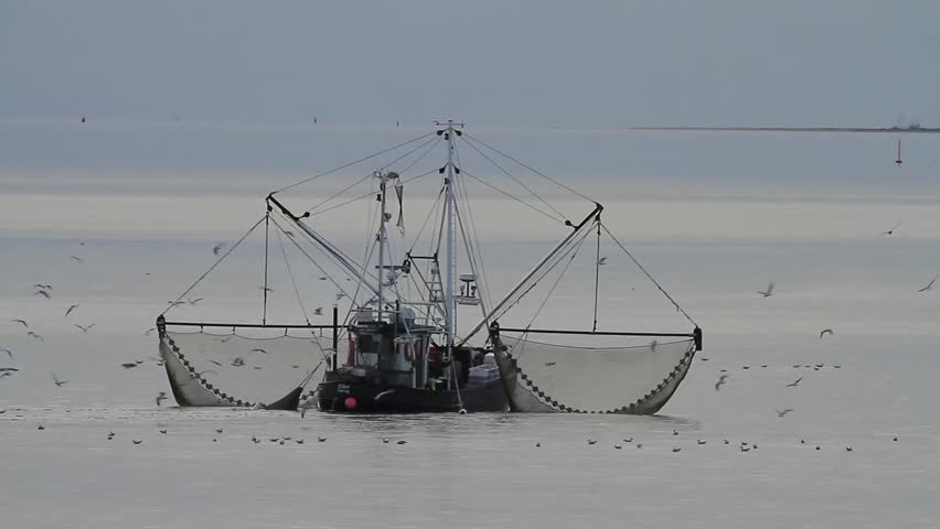 Fishing Cutter