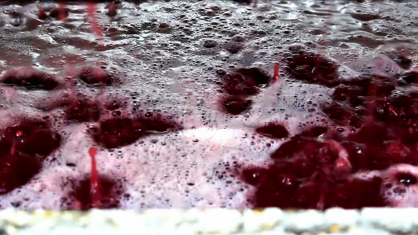 Winemaking ; fresh squeezed grape juice ready for fermentation in winemaking,video clip
