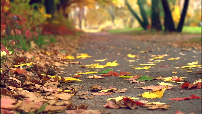 Autumn Leaves Falling in autumnal Park. Fall. Slow Motion Dolly shot 240 fps