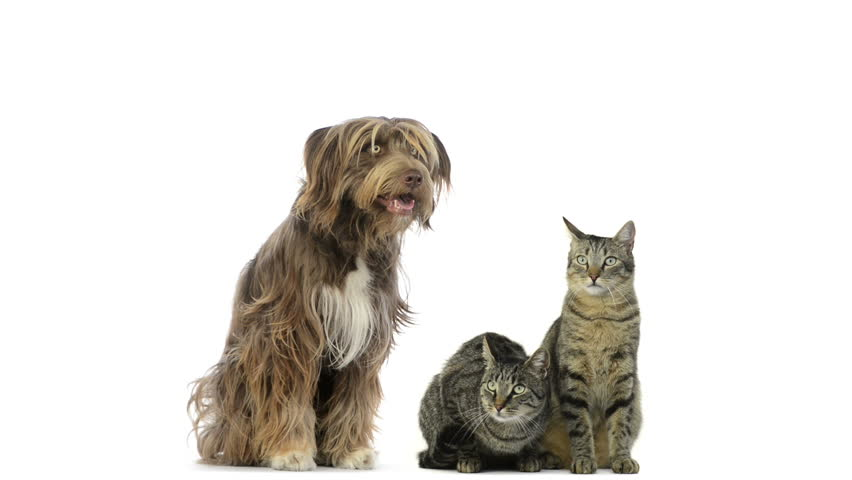 Crossbreed dog and cats sitting and looking around