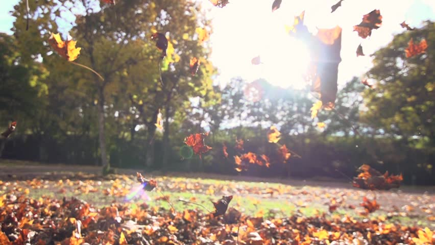 Autumn leaves falling in slow motion. colorful fall season. 1920x1080 hd | Shutterstock HD Video #5000075