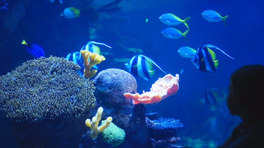 Aquarium Fish Stock Video Footage Aquarium Fish Hd Video Clips