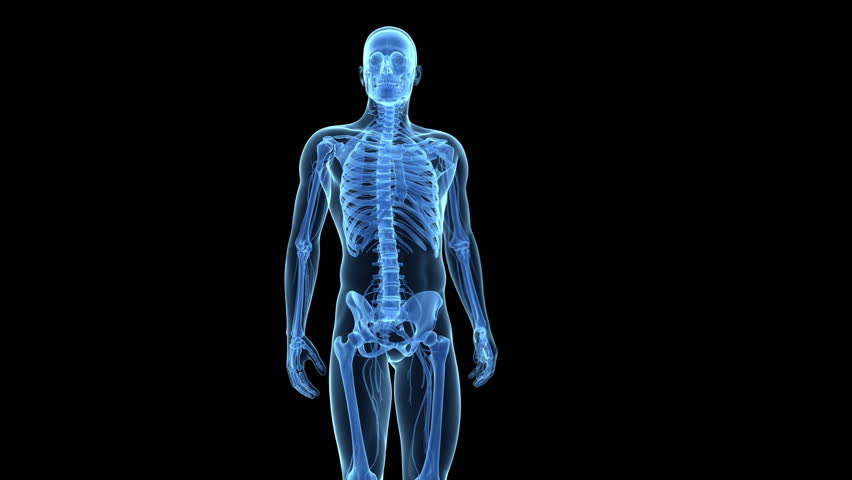 Hip Joint Anatomy Stock Footage Video 100 Royalty Free 5040395