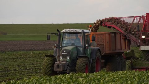 Sugar beets harvesting machine off-loading to trailer