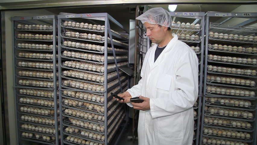 Man calculating earnings on chicken farm eggs