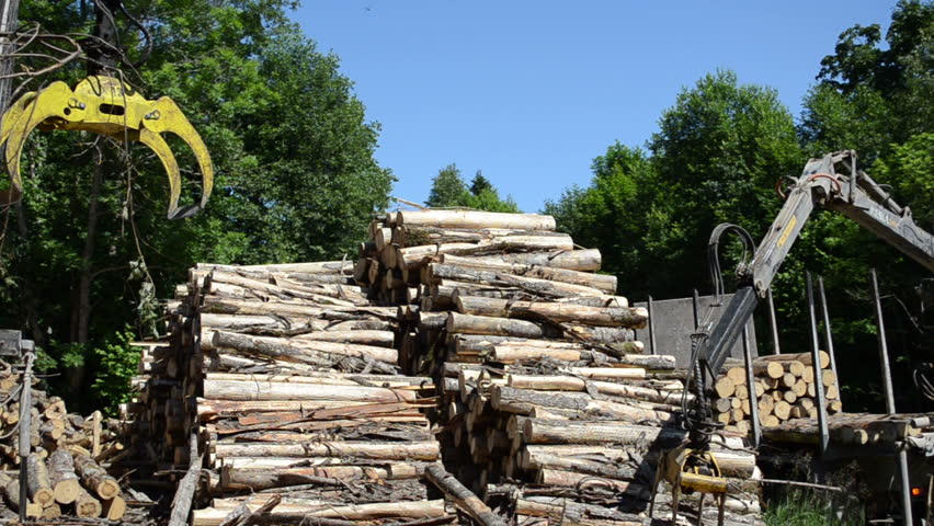 Man loading fell tree logs with timber crane to heavy truck trailer for transportation.