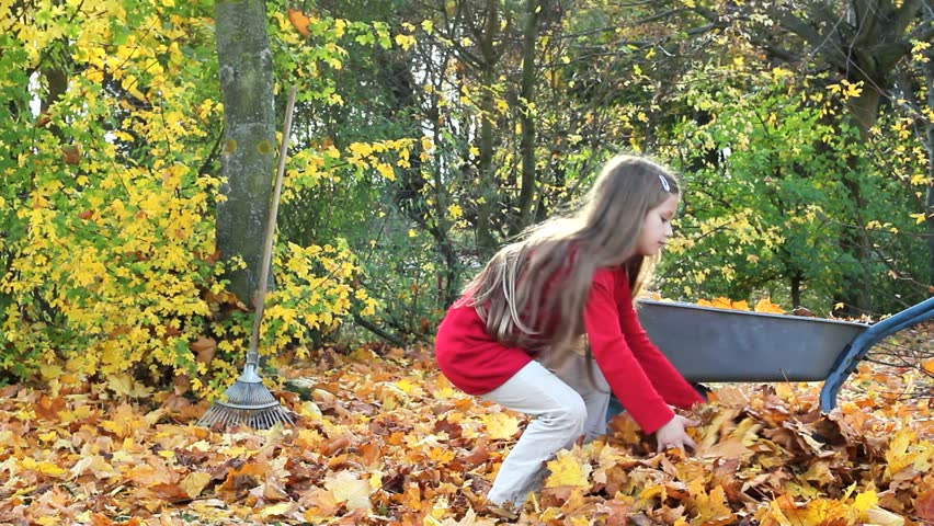 A girl collects leaves/autumn/leaves