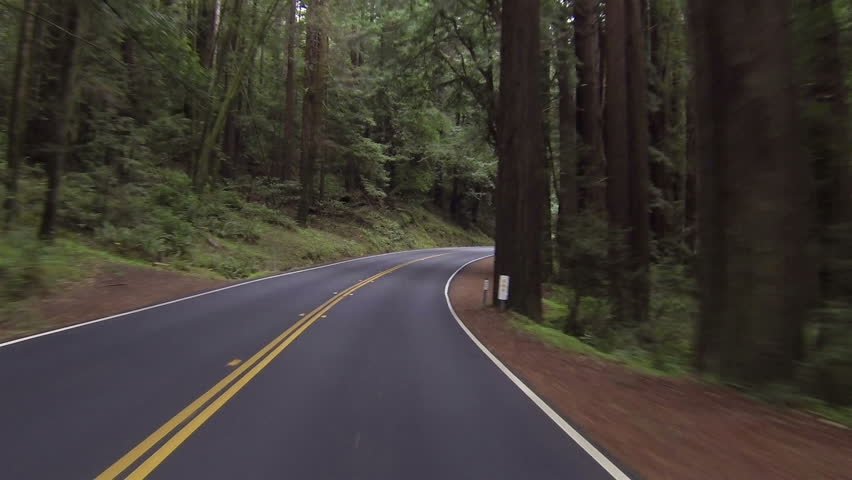 Driving through California redwood forest Point Of View right side road. Vacation travel in vehicles along scenic byway and roads. Redwood National and State parks with old growth trees.
