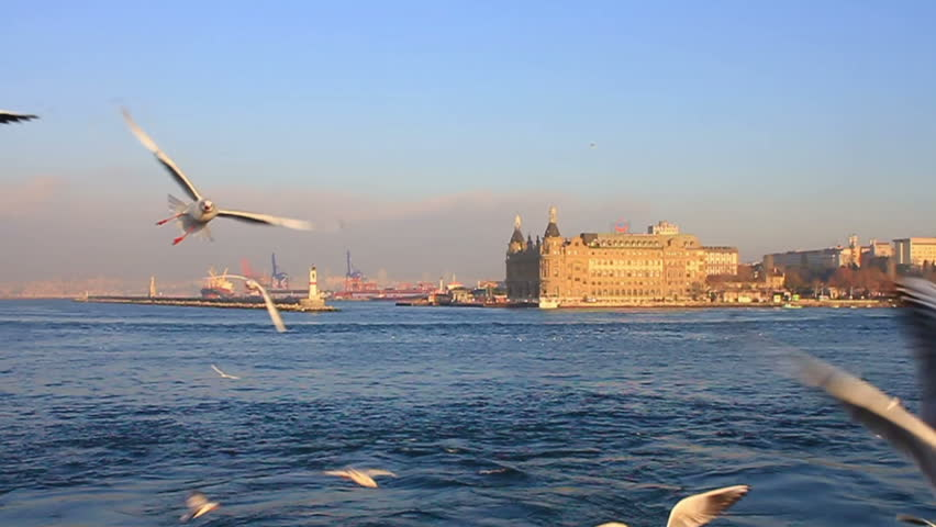 Close up of Seabirds. HQ 60 fps to Slow Motion. Flock of seagulls following the Istanbul ship at Kadikoy.   #5214974