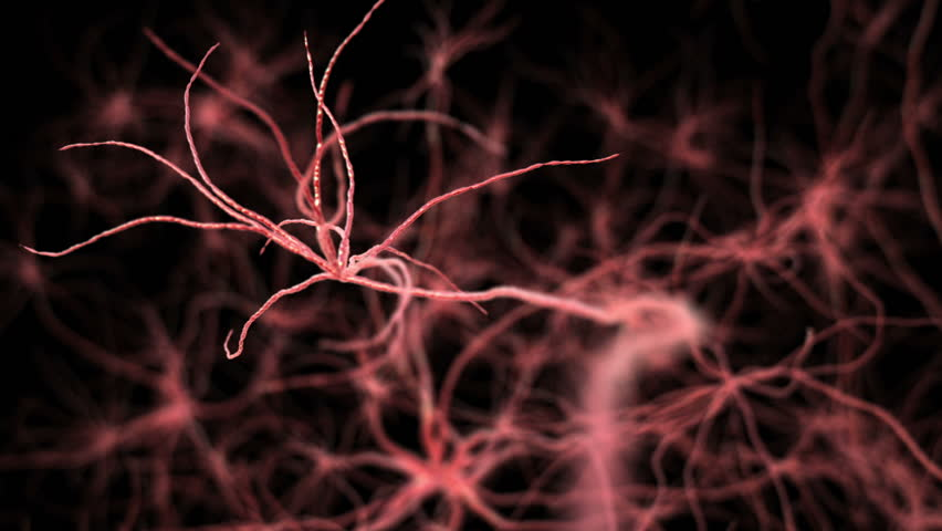 Neurone synapse network. Flight through brain. 3D animation.