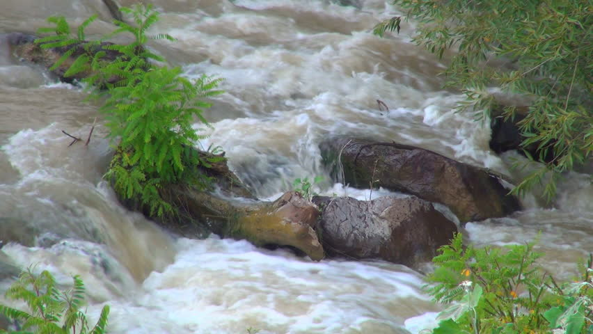 Mountain River Landscape of Nature, View of a Stream, Creek, Brook, Leaves, Foliage