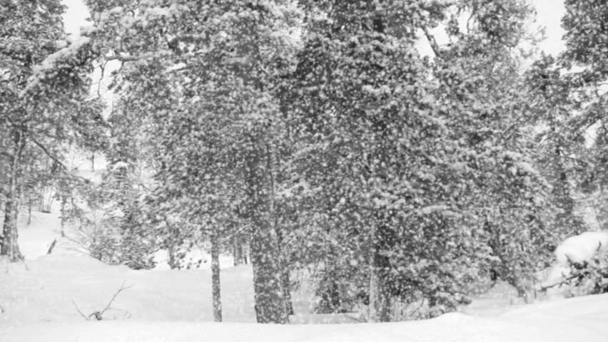 Panorama of the winter forest. Heavy snowfall