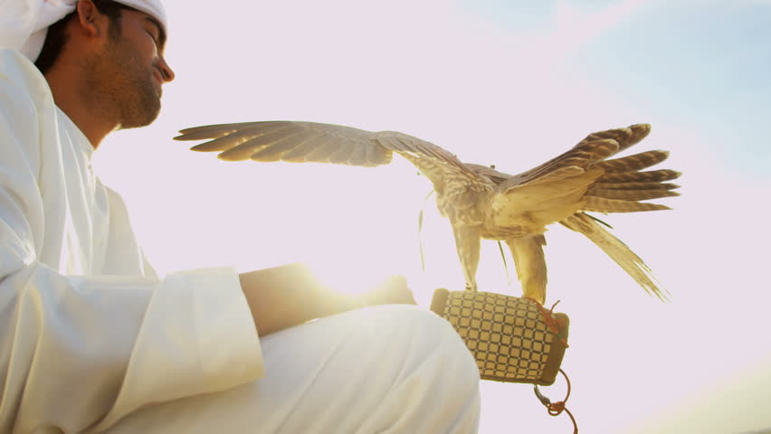 Proud Arabic male owner in desert with trained bird of prey perching on the gloved wrist displaying wings sun lens flare shot on RED EPIC, 4K, UHD, Ultra HD resolution