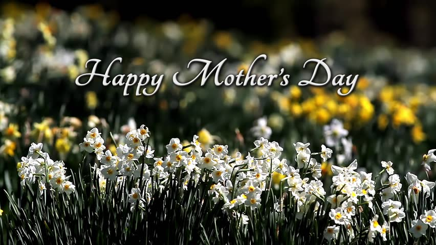 White and yellow daffodils sway in a gentle breeze with Happy Mothers Day text. Looping.