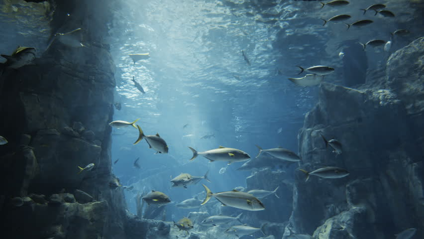 Aquatic water world background with lots of different kind of fishes.   Shutterstock HD Video #5361365