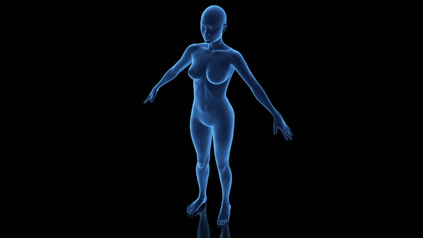 3D female anatomy model in loop rotation