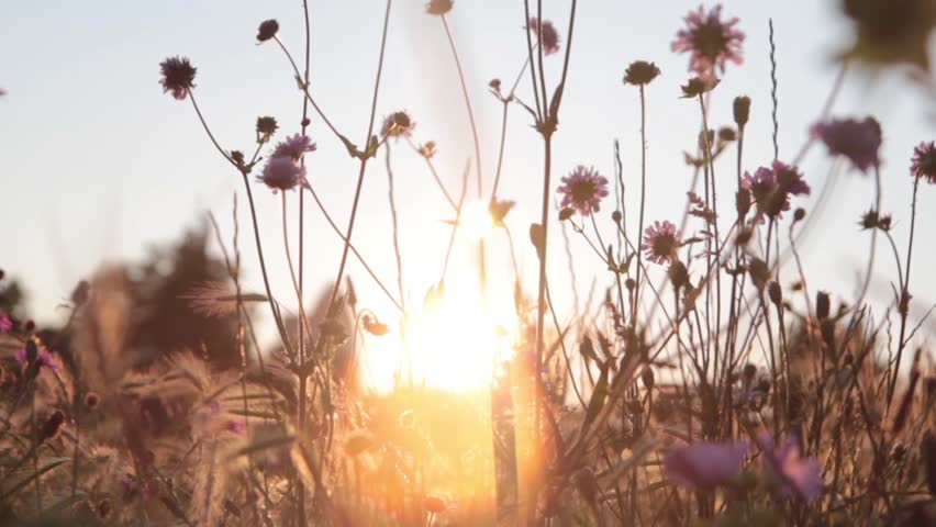Abstract shots of grass and flowers, with a shallow depth of field. Shot against a setting sun in London, England.