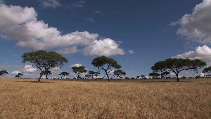 Time lapse of the savannah of the Serengeti with acacia and ebony trees.