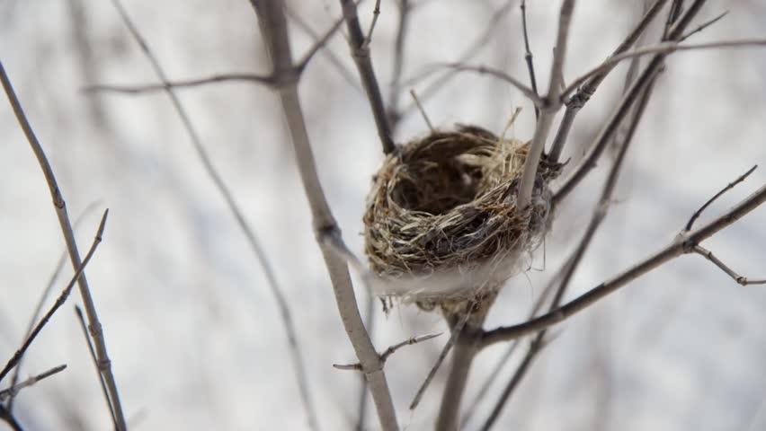Bird nest definition/meaning
