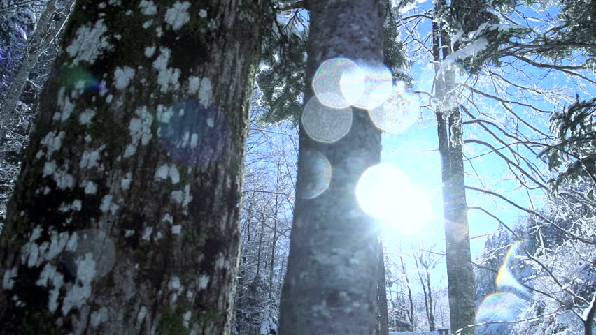 Beautiful winter forest. snow trees. snowing snowy. sunset dusk sunshine. woods nature. slow motion. winter background. romantic wonderland. beautiful environment  | Shutterstock HD Video #5594738