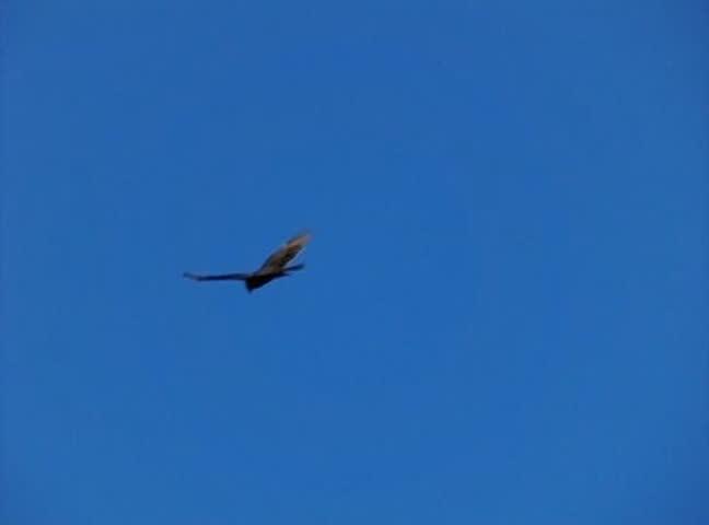 High Speed Camera : Golden Eagle 01 Flying
