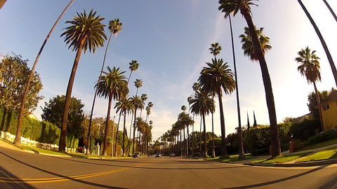 BEVERLY HILLS, CA: February 19, 2014- Wide shot of driving through a suburban neighborhood under tall palm trees circa 2014 in Beverly Hills. Features view of this famous palm tree lined street.