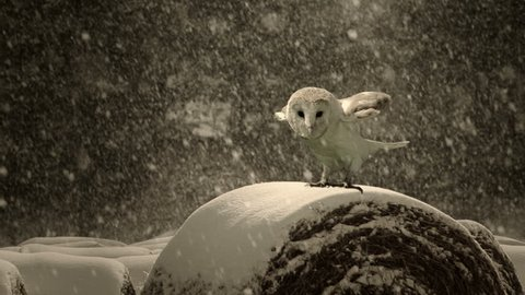 An owl in the midst of a snow storm. 4k slow motion footage.