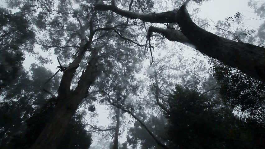 Long camera track through a dark forest | Shutterstock HD Video #5811482