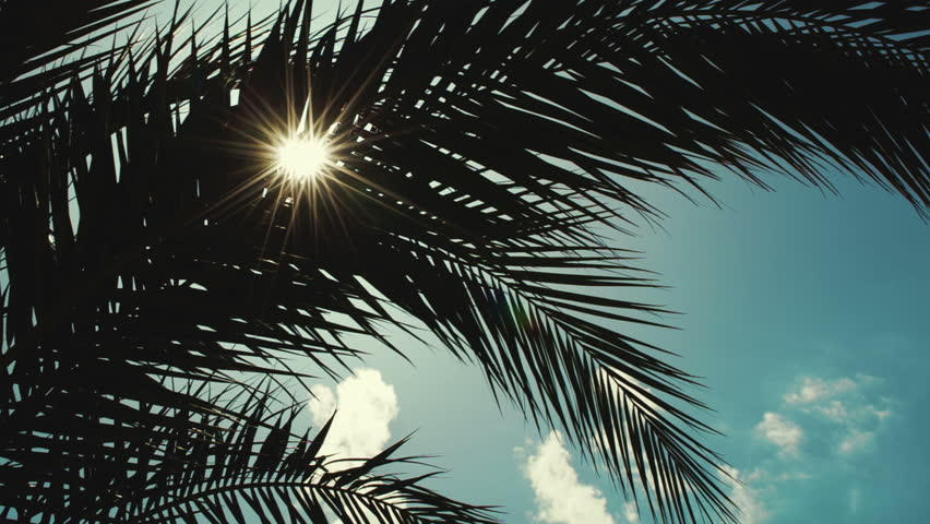 Panning shot of bright sun shining through the palm leaves. Tropical scene