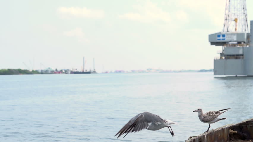 Two seagulls sitting on edge of water