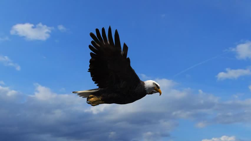 Bald Eagle Flight Close-Up tracking shot #5993255