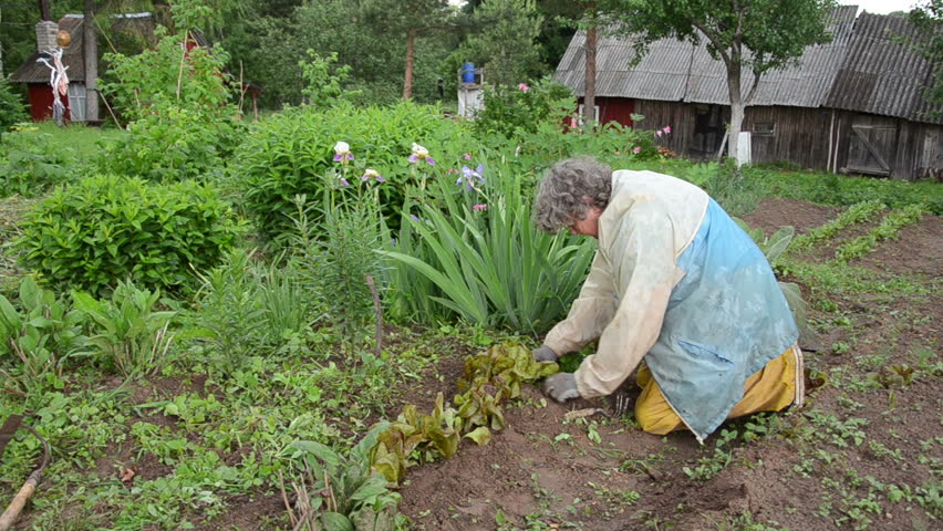 Old Woman With Workwear Rain Carefully Grub Weeds Of Beds   HD Stock Video  Clip