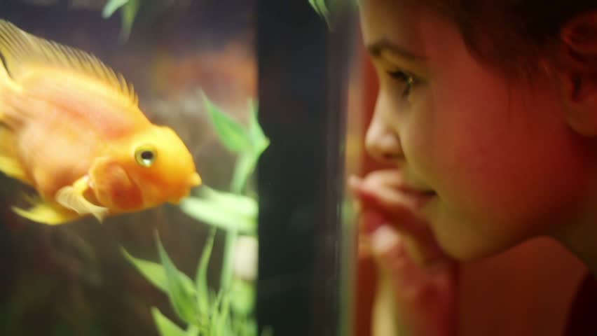 Girl looks at fish swimming in aquarium and presses her nose against glass