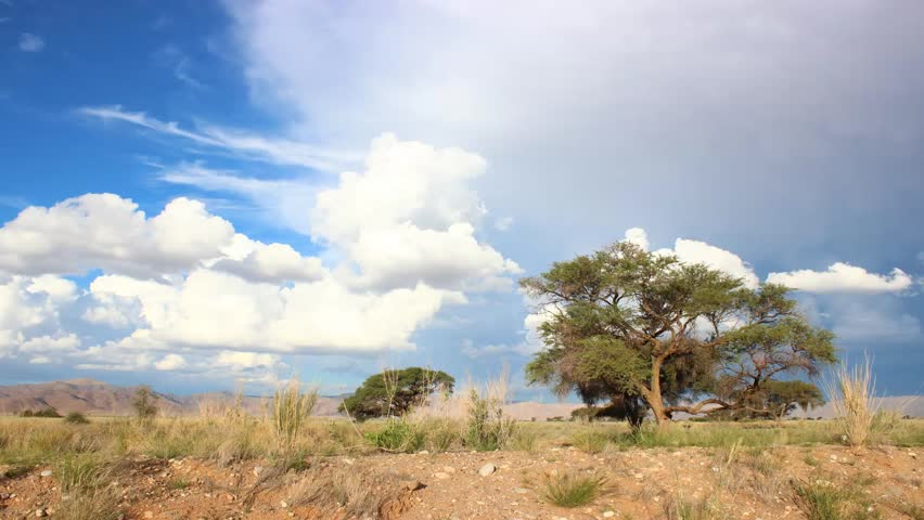 Header of Acacia erioloba