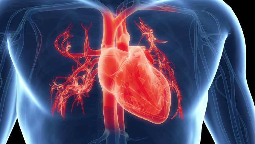 Stock Video Of Human Anatomy Heart On A Dark 24001642 Shutterstock