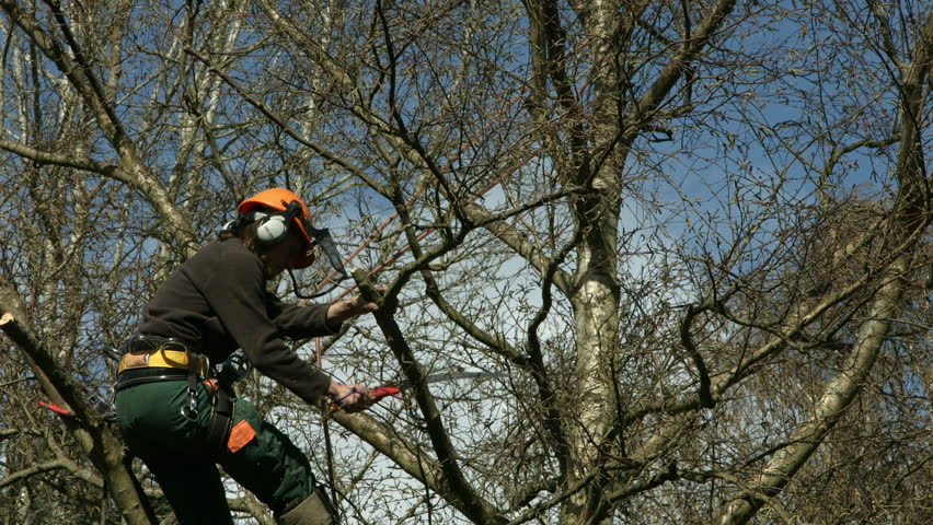 Arborist Lumberjack in Tree Using Stock Footage Video (100% Royalty-free)  6123245 | Shutterstock