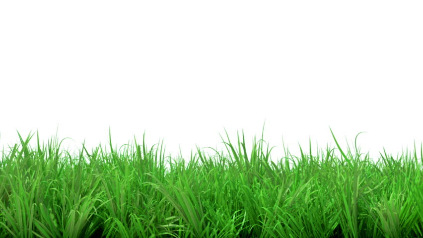 green grass field animated. A Time-lapse Animation Of Growing Gras . Green Grass Field Animated