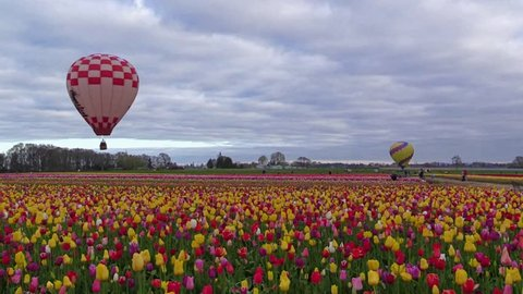 Oregon Wooden Shoe Tulip Festival 2014
