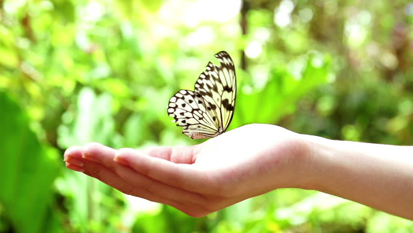 Butterfly in hand pictures Butterfly Pictures Butterfly Photo Gallery