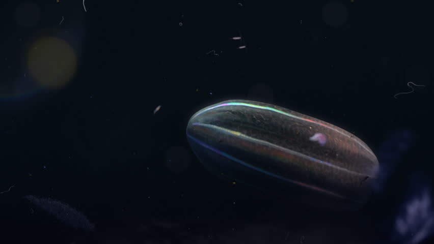 Plankton CG floating in deep sea,  Iridescent comb jellies Zoo plankton. in South Atlantic Sea
