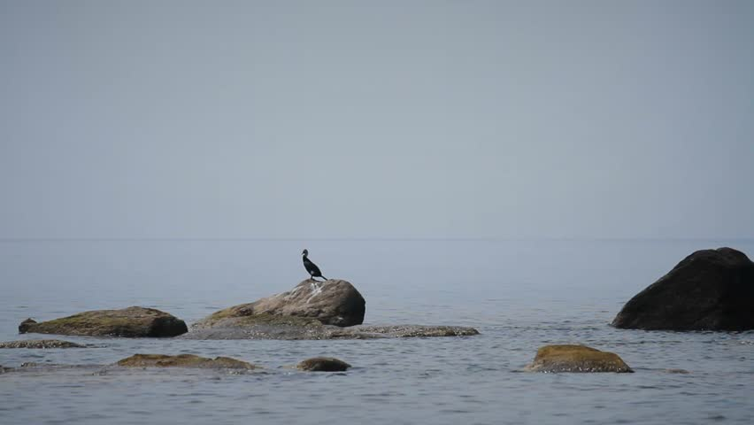 Seabirds sitting on rocks in the sea bay