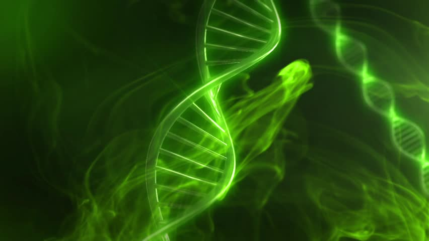 Biology Animation Library :: DNA Learning Center