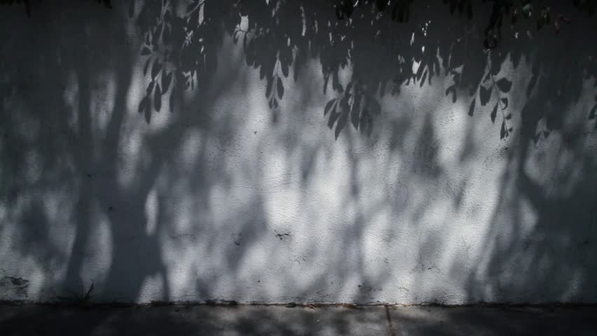 White wall background with intricate texture of shadows from trees and leaves subtly moving.