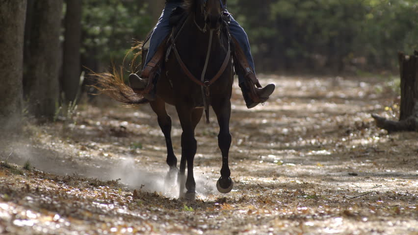 View of horse's legs as they run closer to the camera, in slow motion