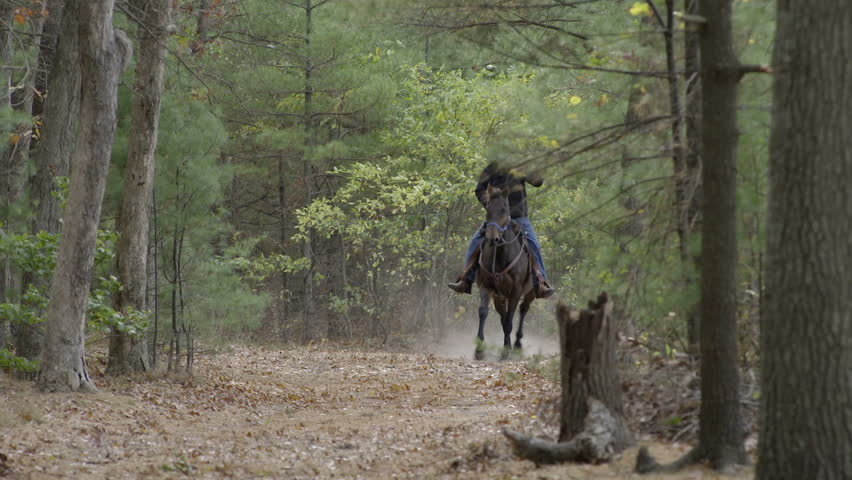A man rides a galloping horse through the woods towards the camera