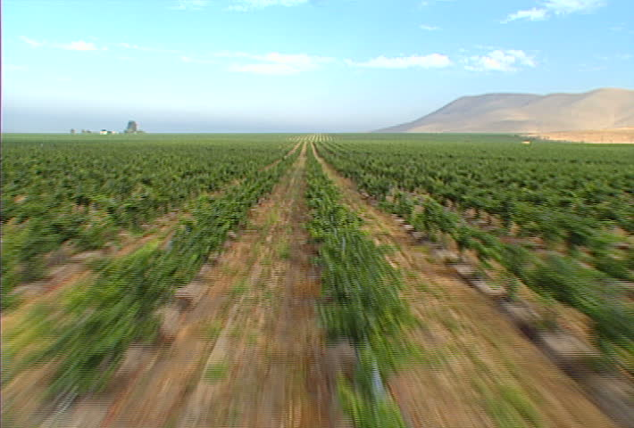 A low-flying aerial shot over a Santa Barbara vineyard.